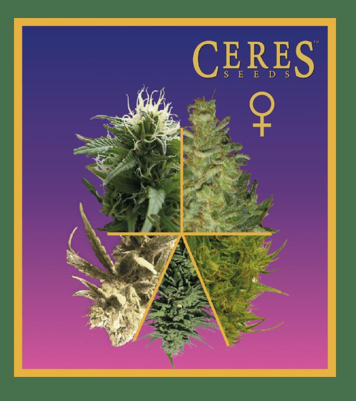 Ceres Mix (Feminized Seeds)