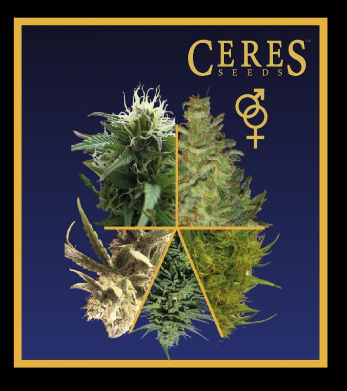 Buy Ceres Mix (Regular Seeds)