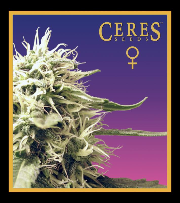 Ceres Skunk (Feminized Seeds)