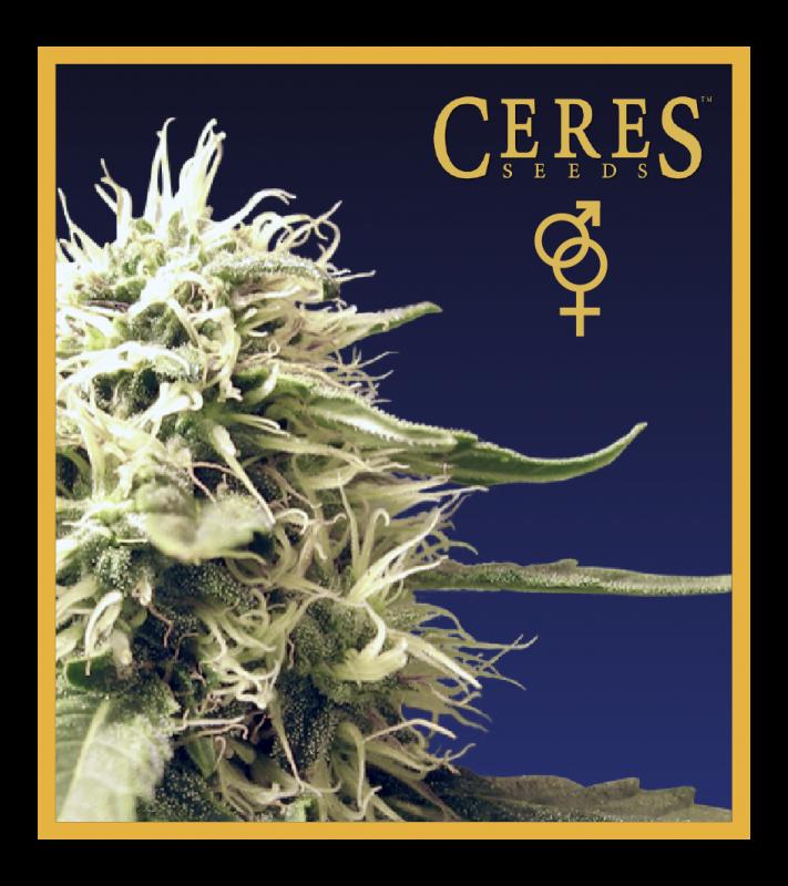 Buy Ceres Skunk (Regular Seeds)
