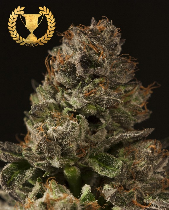 Strawberry Sour Diesel (Feminized Seeds)