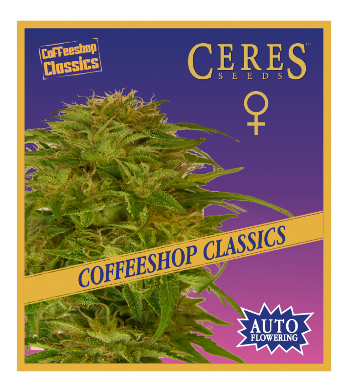 Super Automatic Haze (Autoflowering Seeds)