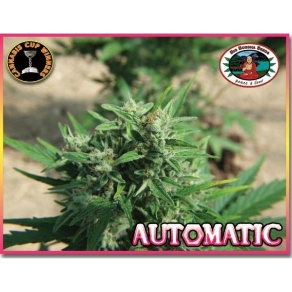 Big Buddha Automatic (Autoflowering Seeds)