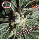 Buddha Kush OG (Feminized Seeds)