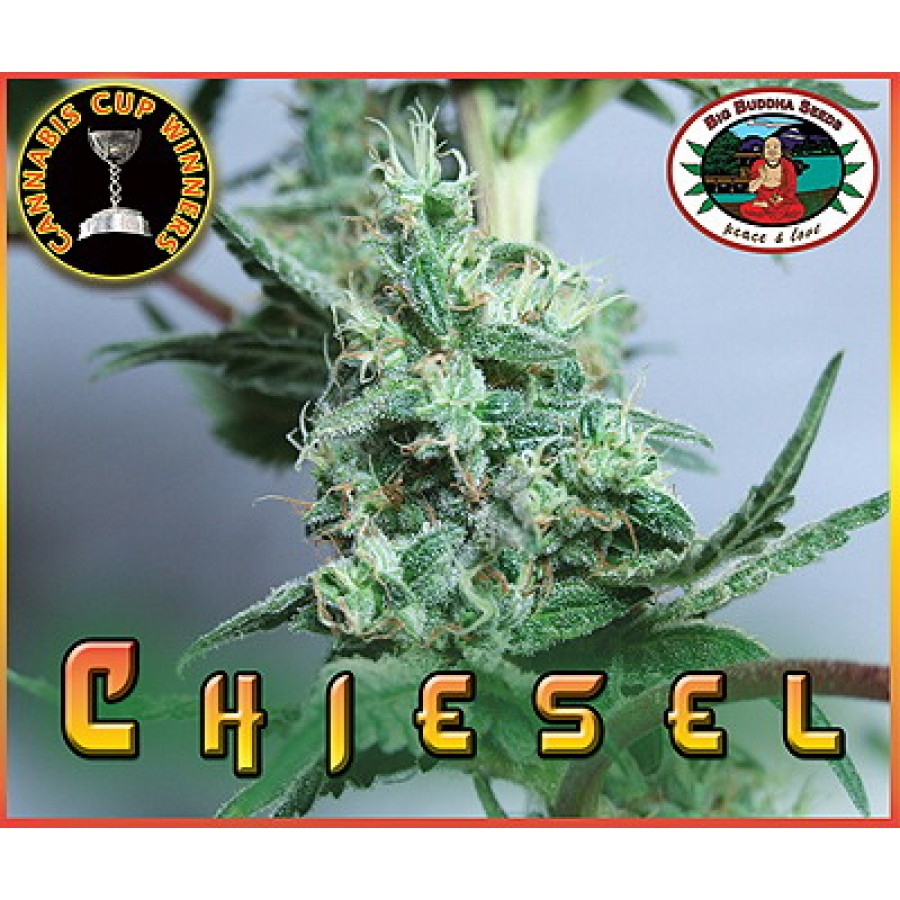 Chiesel (Feminized Seeds)