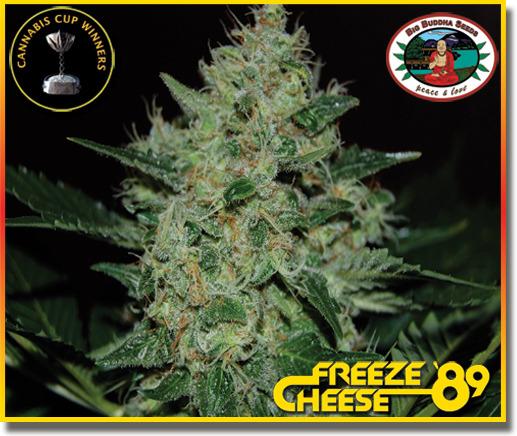 Freeze Cheese '89 (Feminized Seeds)