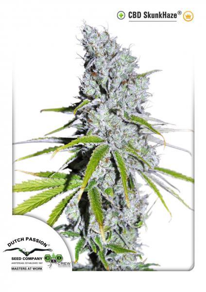 CBD Skunk Haze (Feminized Seeds)