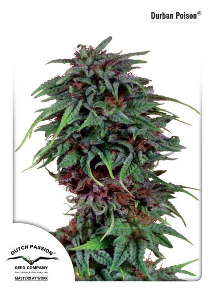 Durban Poison (Feminized Seeds)