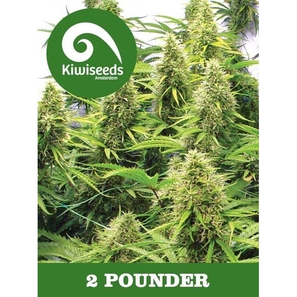 2 Pounder (Feminized Seeds)