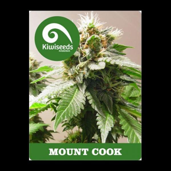Mt Cook (Feminized Seeds)