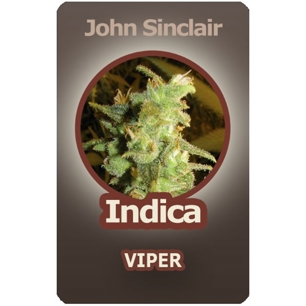 John Sinclair Viper (Feminized Seeds)