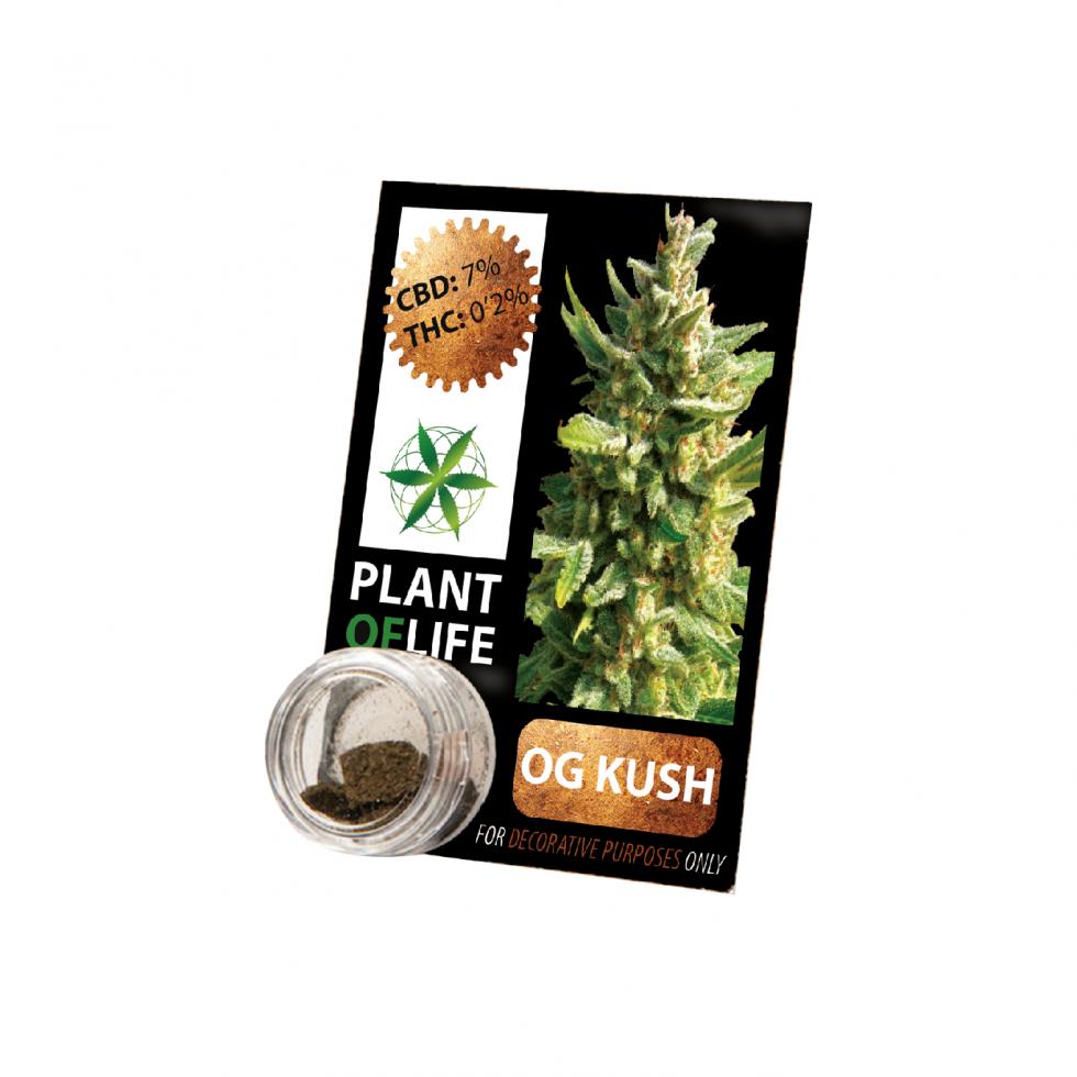 Buy O.G.Kush Solid 3.8% CBD 1 g