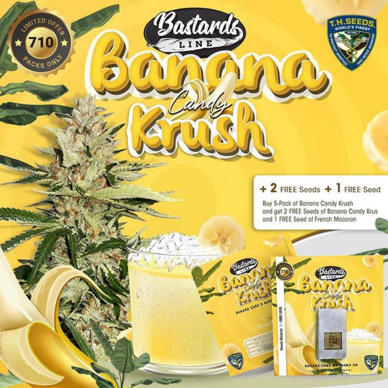 Banana Candy Krush Limited Edition (Feminized Seeds) T.H.Seeds
