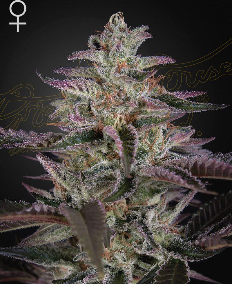 Banana Krumble (Feminized Seeds) - Green House Seeds