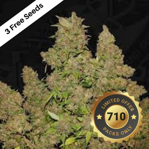 MOB (Feminized Seeds) T.H.Seeds
