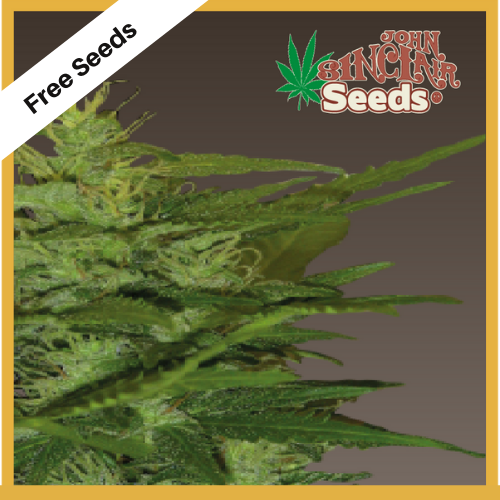 Zenta (Feminized Seeds) - Free Seeds - John Sinclair Seeds